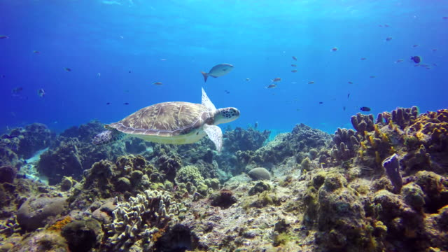 an underwater sea turtle at the bottom the sea - under the sea fish video stock e b–roll