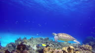 istock An underwater sea turtle at the bottom the sea 1184237643