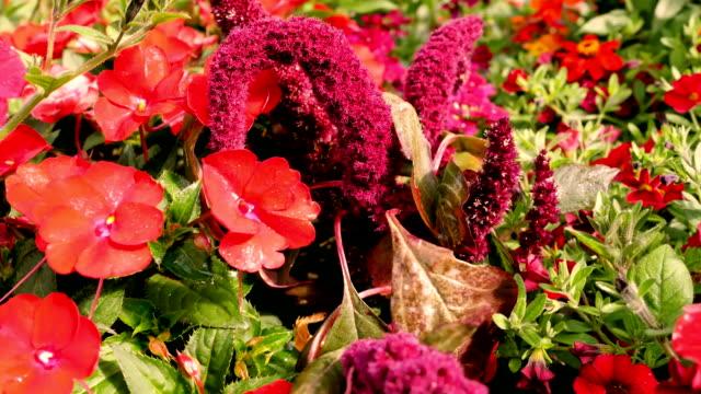 en ovanlig blomma lila. - städsegrön växt bildbanksvideor och videomaterial från bakom kulisserna