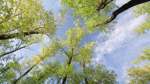 An upward view of a tree video
