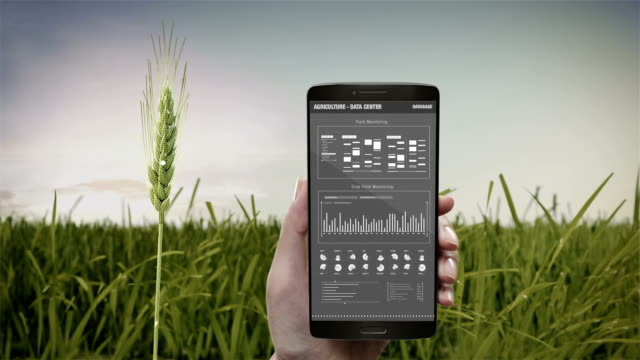 analysis barley crop in smart phone, mobile.  barley green field, data in smart agriculture smart farming, internet of things. 4th industrial revolution. - точность стоковые видео и кадры b-roll