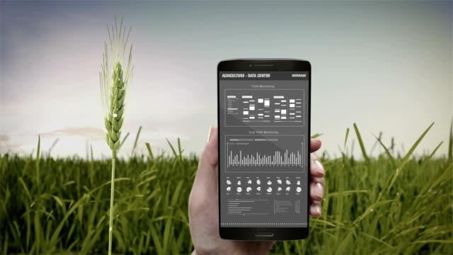 analysis barley crop in smart phone, mobile.  barley green field, data in smart agriculture smart farming, internet of things. 4th industrial revolution. - dokładność filmów i materiałów b-roll