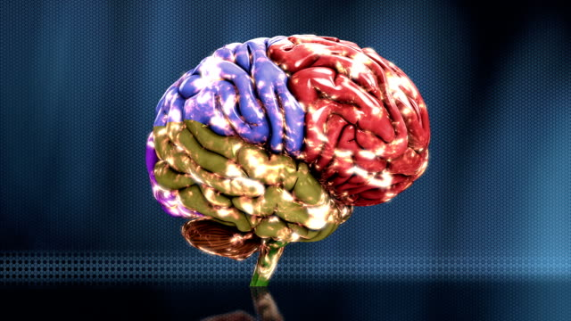 a biological analysis of the human brain in medical research An improved high-throughput lipid extraction method for the analysis of human brain lipids illawarra health and medical research institute.