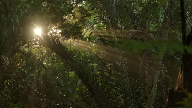 anamorfiska lins effekt. skogen i morgondimman och strålen från solen. - abstract silhouette art bildbanksvideor och videomaterial från bakom kulisserna