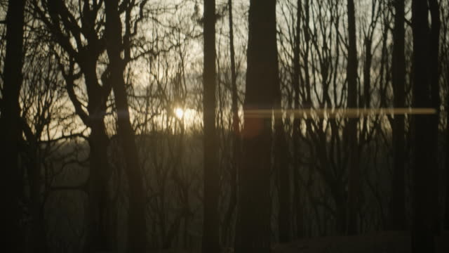 anamorphic woods and sun set squeezed - manchester inghilterra video stock e b–roll