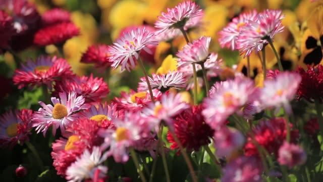 stockvideo's en b-roll-footage met anatolië heeft heel verschillende soorten planten en bloemen, waar in de bodem van het anatolië groeit. anatolië/turkije 11/04/2015 - fresh start yellow