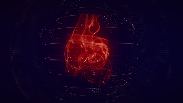 anatomically correct red digital human heart seamless loop with cardiac scan - cuore umano video stock e b–roll