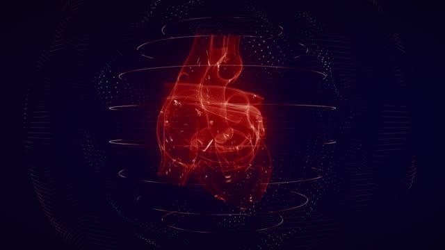 anatomiskt korrekt rött digitalt mänskligt hjärta sömlös slinga med hjärtskanning - människohjärta bildbanksvideor och videomaterial från bakom kulisserna