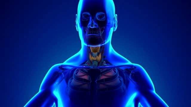 Anatomy of Human Larynx - Medical X-Ray Scan video