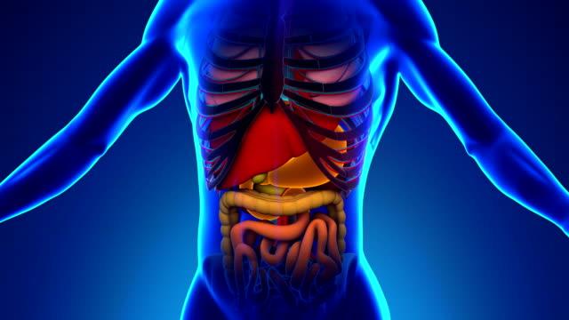 vídeos y material grabado en eventos de stock de anatomía de estómago humano-radiografía médica de barrido - afección médica