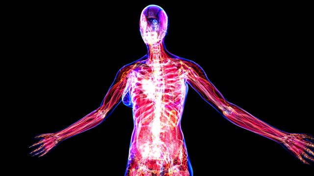 Anatomy Of The Female Body video