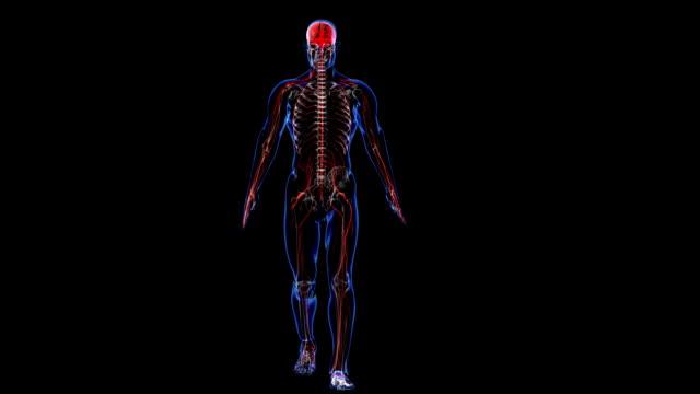 anatomia: skóry, stary i nerwowego - część ciała zwierzęcia filmów i materiałów b-roll