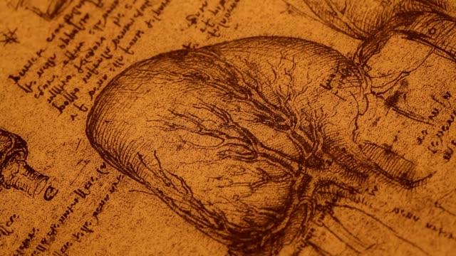 anatomie-kunst - geschichtlich stock-videos und b-roll-filmmaterial