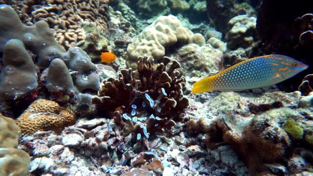 Anchor Damaged Coral Fragile Ecosystem Ocean Environment video