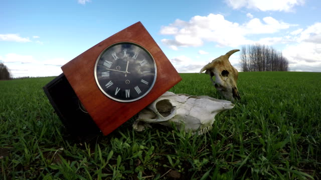 Ancient clock box and farm animals skulls on spring field time lapse video