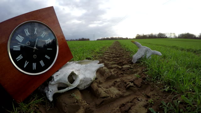 Ancient clock box on tractor track and animals skulls on field,  time lapse video