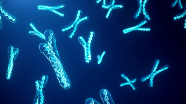 X and Y Chromosome on blue background. Chromosomes with DNA helix inside under microscope. Human chromosome. Illustration X and Y chromosome. Encoded genetic code.