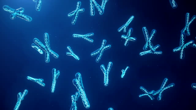vídeos de stock e filmes b-roll de x and y chromosome on blue background. chromosomes with dna helix inside under microscope. human chromosome. illustration x and y chromosome. encoded genetic code. - cromossoma