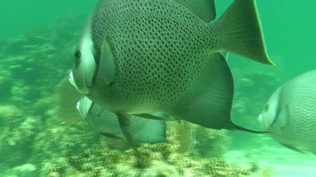 Angel Fish video