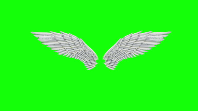 angel wings animation looped - aquila video stock e b–roll