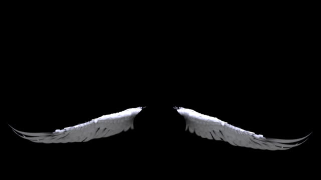 Angel Wings video