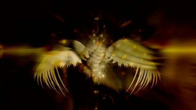 ali angeli - angelo video stock e b–roll