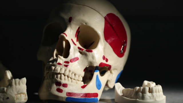 Angled Skull and Jaw Bones as Dental Examples video