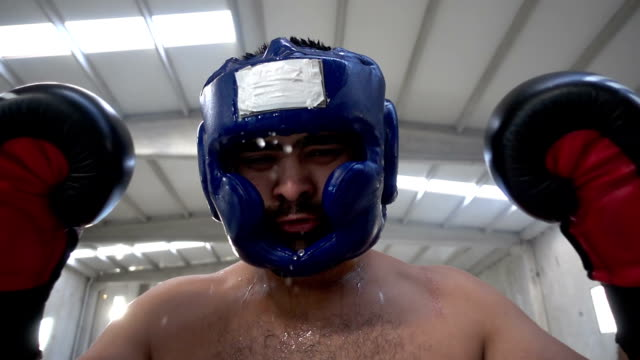Angry Boxer video