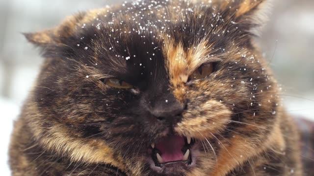 arga väsande katt på vintern - sportaktivitet bildbanksvideor och videomaterial från bakom kulisserna