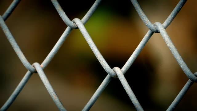 hayvan tel çit soyut arkasında - kafes sınırlı alan stok videoları ve detay görüntü çekimi