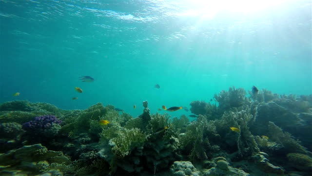 動物、生物多様性、青、青の背景、カラフルなサンゴ礁、群衆、ダイビング、カラフル、サンゴ、深い深度、エジプト、インドネシア、モルディブ、ダイビング、紅海、魚、魚、グループ、� - 広角撮影点の映像素材/bロール