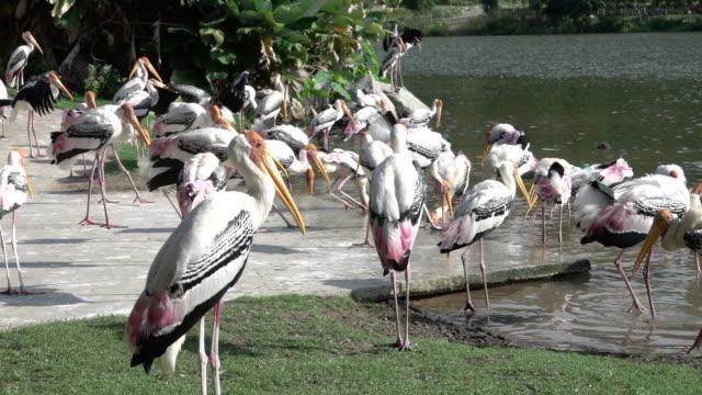 HD: Tiere Vogel im zoo – Video