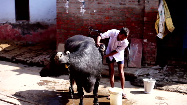 Animal care in rural India
