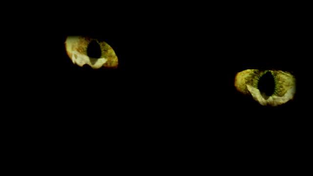 occhio di animale - pelo animale video stock e b–roll