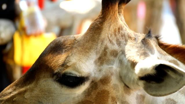 Animal feeding video