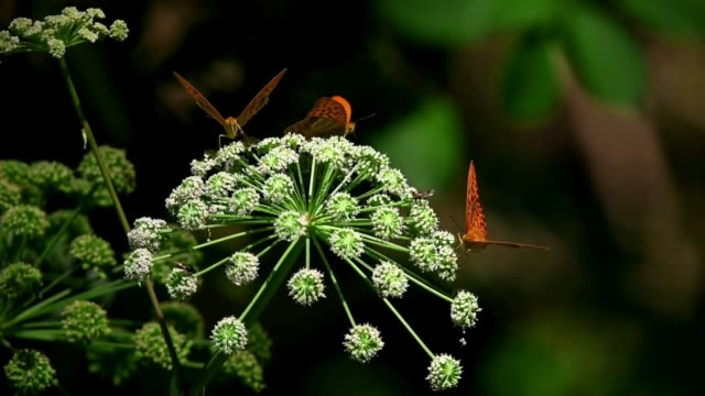 Animal life on a flower, Butterflies