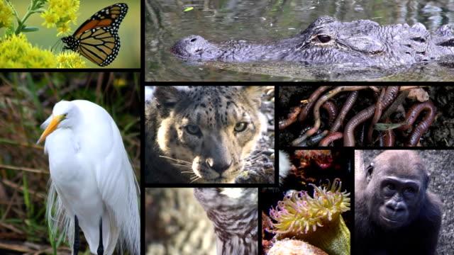 Animal Montage 2 video