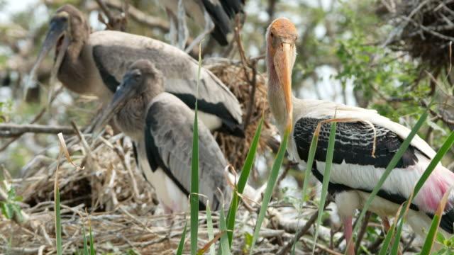 animal worldwide ,  Freshwater Bird on treetop video