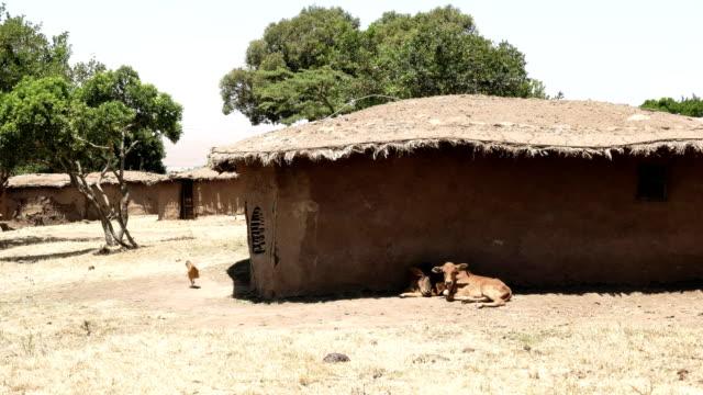 animals and mud huts in a traditional manyatta of masai mara, kenya video