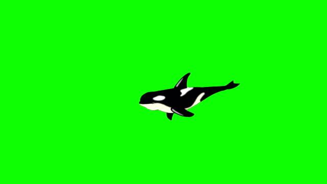 vidéos et rushes de footages animaux - baleine