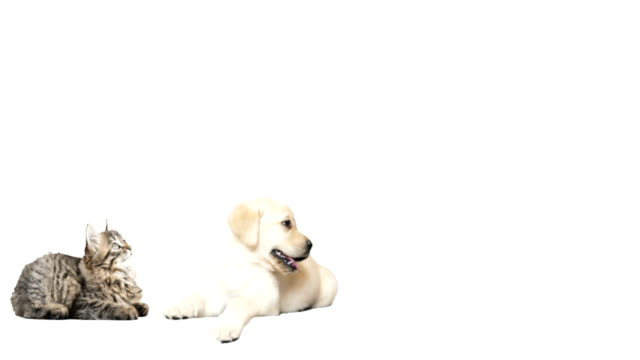 animals look on a white background