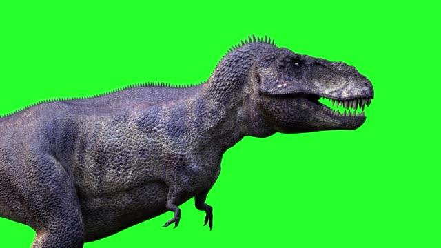 animer un cours dinosaure Tyrannosaurus Rex 3d render sur fond vert - Vidéo