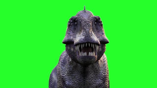 animera en rinnande dinosaurien tyrannosaurus rex 3d render på grön bakgrund - dinosaurie bildbanksvideor och videomaterial från bakom kulisserna