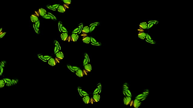 Animated Butterflies Fly In/Out - Green (With Alpha Variations) video
