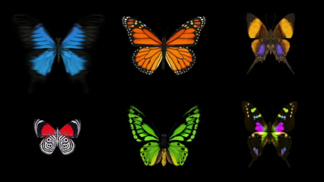 Animated Butterflies X6 - With Alpha (Full HD) video