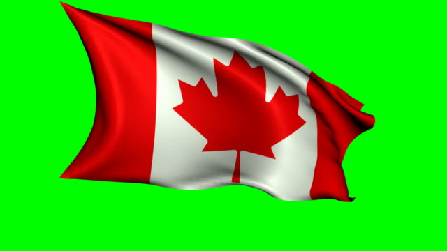animated canadian flag waving in the wind - canada flag stock videos & royalty-free footage