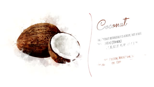 Animated card of Coconut with a list of its useful properties On white paper appears Coconut and the text is telling about the energy value and useful properties. coconut stock videos & royalty-free footage