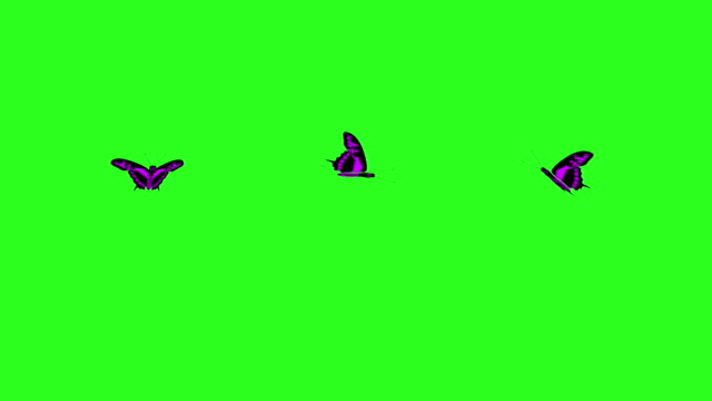 Animated colorful beauty butterfly on green screen chroma key video