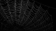 istock Animated glistening spiderweb on alpha channel 847853700