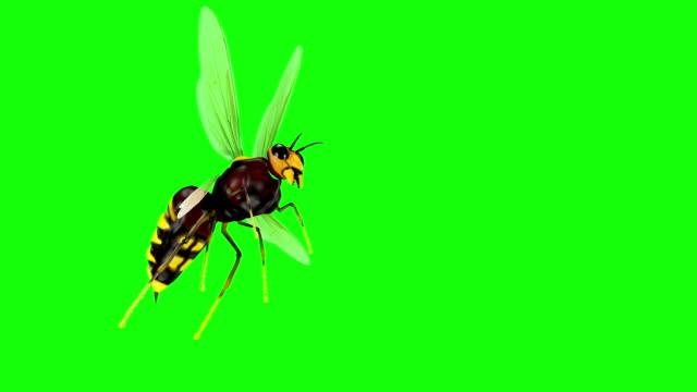 vidéos et rushes de animated réaliste 3d abeille looped - insecte
